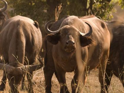 Botswana: Okavango Extreme